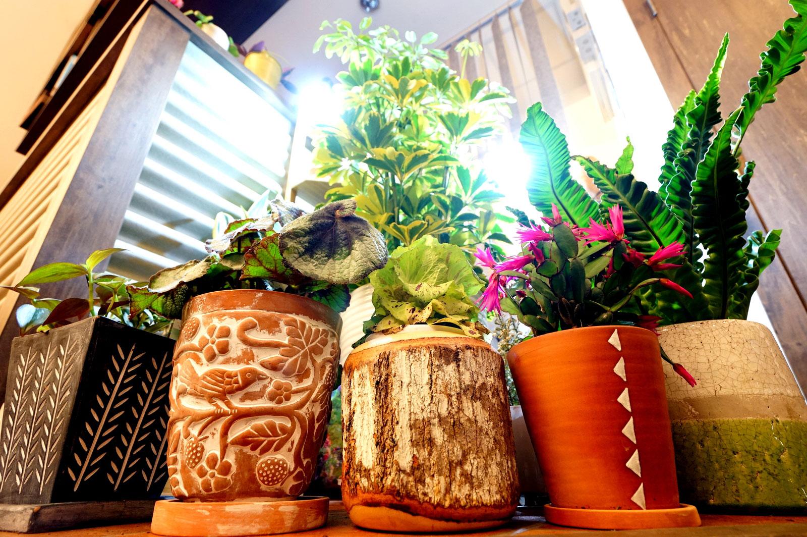 最近の店内!植物事情!【4/11・12は定休日です】