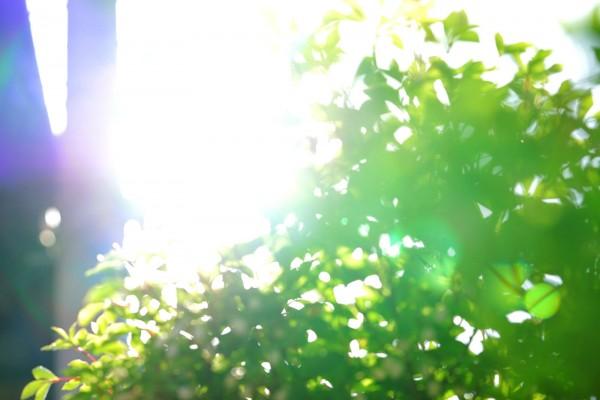 日差しボケ画像 夏の訪れ
