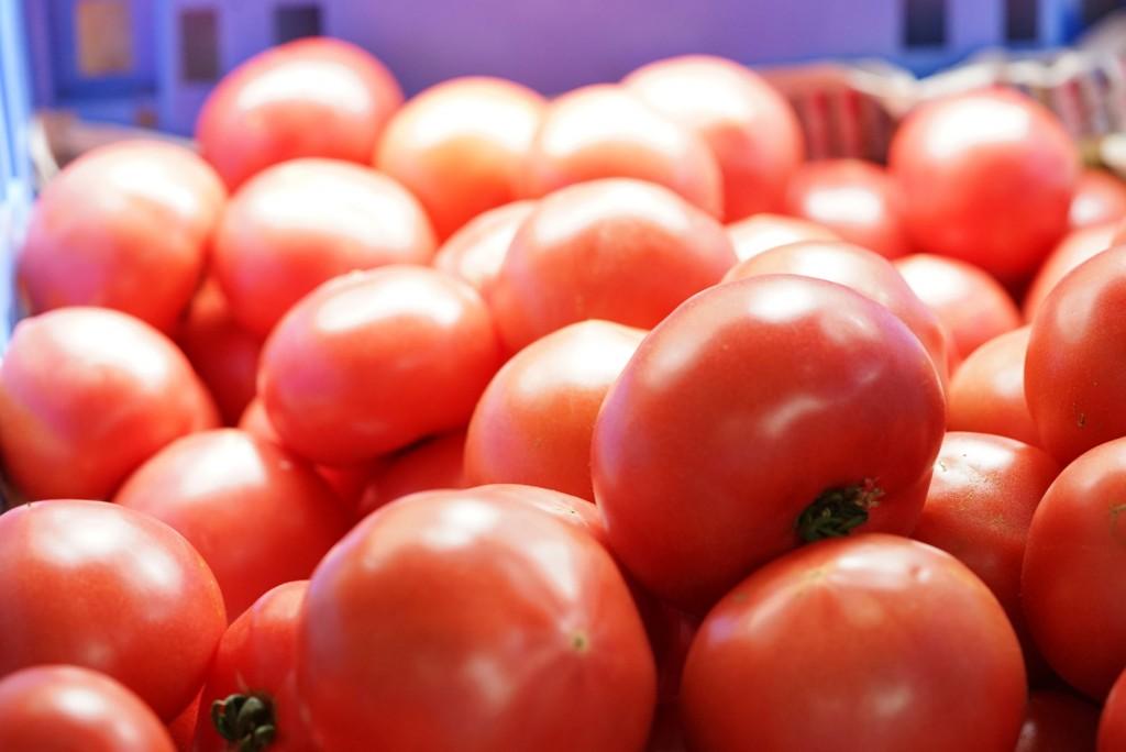 賀茂のトマト