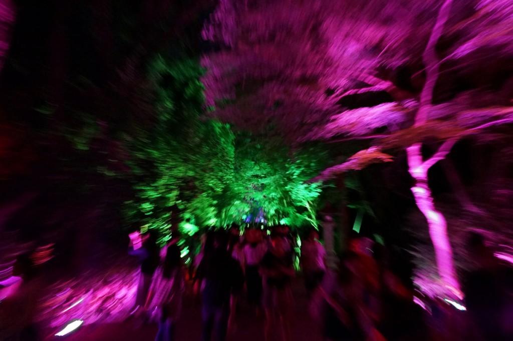 糺の森の光の祭12