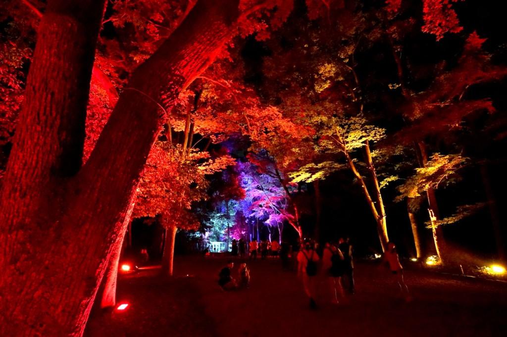 糺の森の光の祭11
