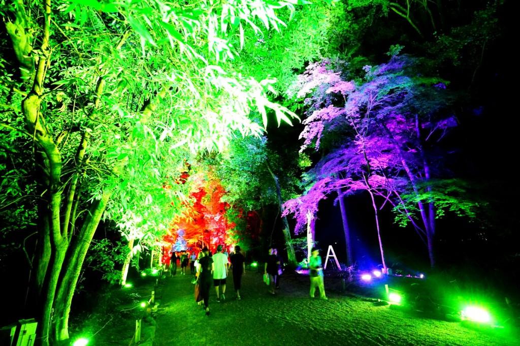 糺の森の光の祭7